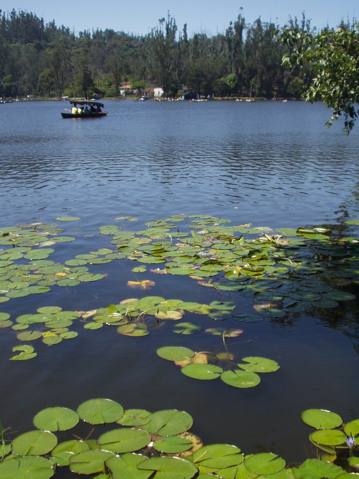 Kodaikanal India  city pictures gallery : Original file ‎ 1,200 × 1,600 pixels, file size: 580 KB, MIME type ...