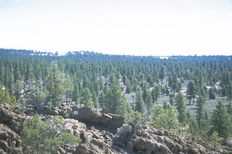 Central Platte Natural Resources District Beau Bearnes