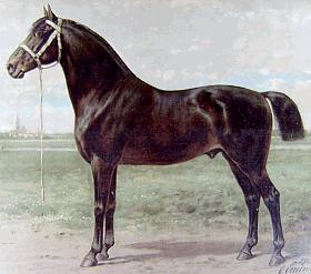 Ostfriesen and Alt-Oldenburger Breed of horse
