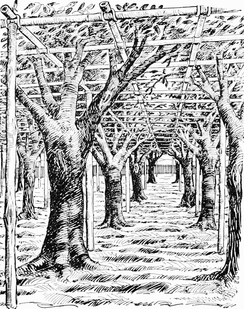 PSM V65 D312 Training old pear orchards in japan.png