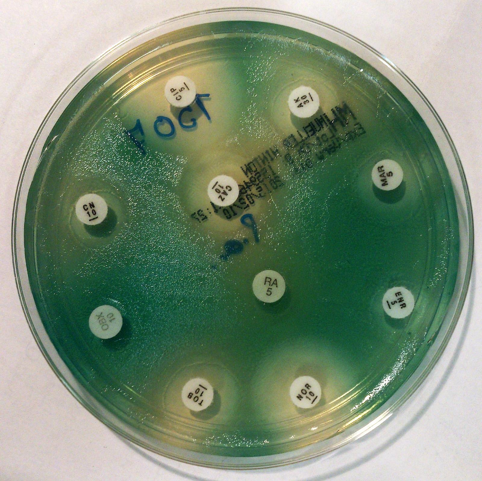 Petasites comp wala dosierung ciprofloxacin