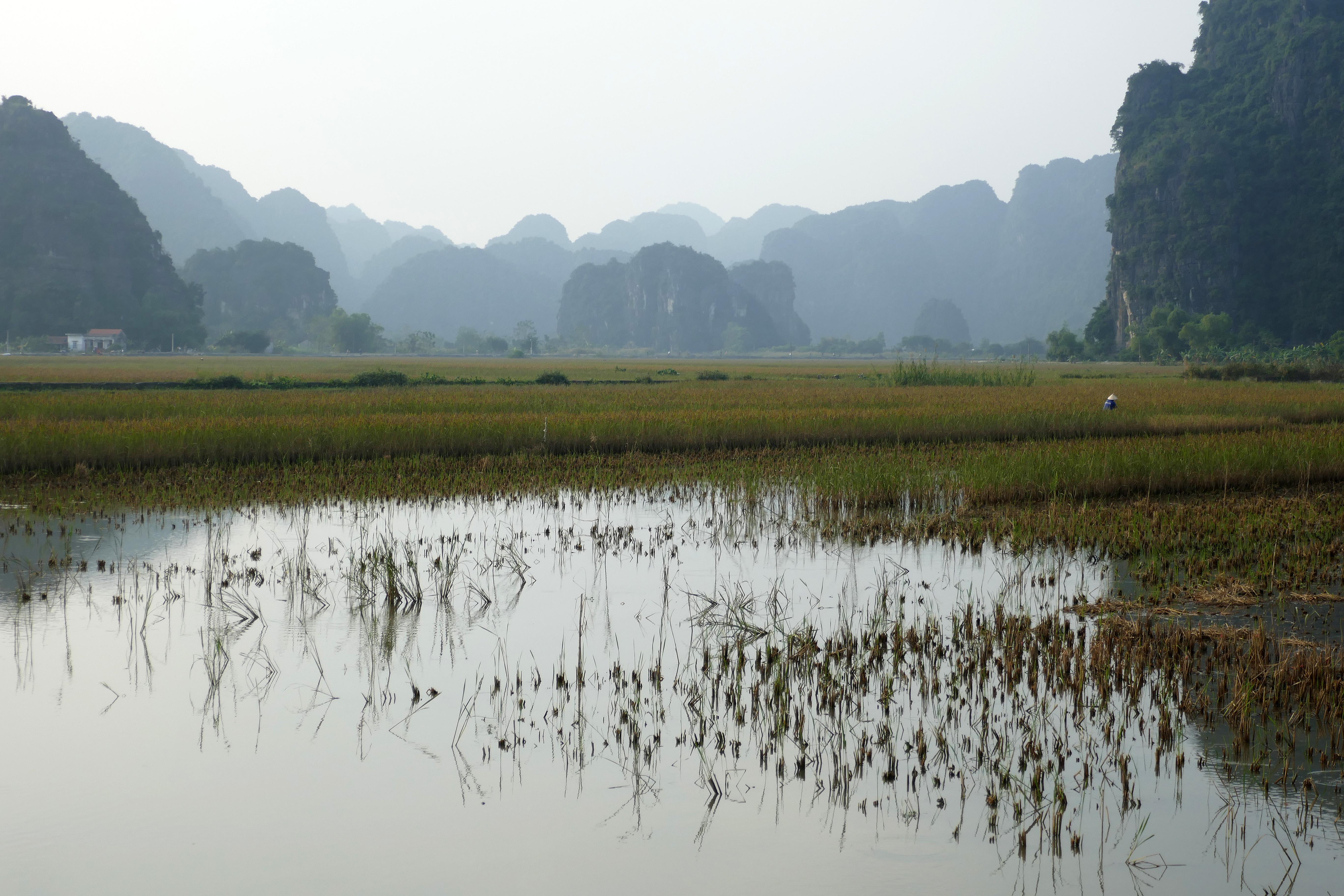 Riziculture à Tam Coc (8).jpg