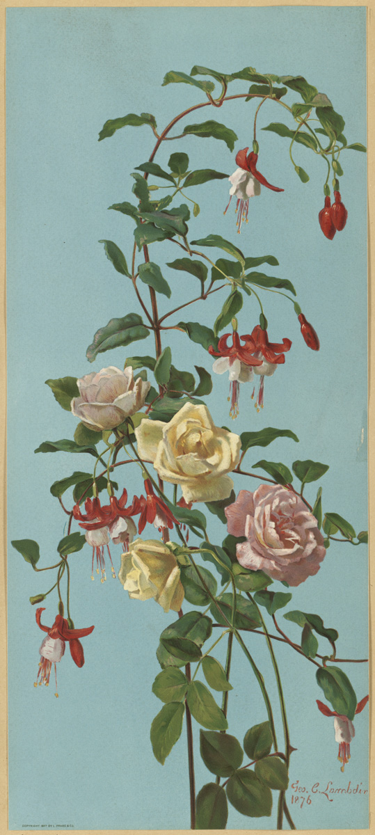 http://upload.wikimedia.org/wikipedia/commons/c/c4/Roses_and_Fuchsia_by_Boston_Public_Library.jpg