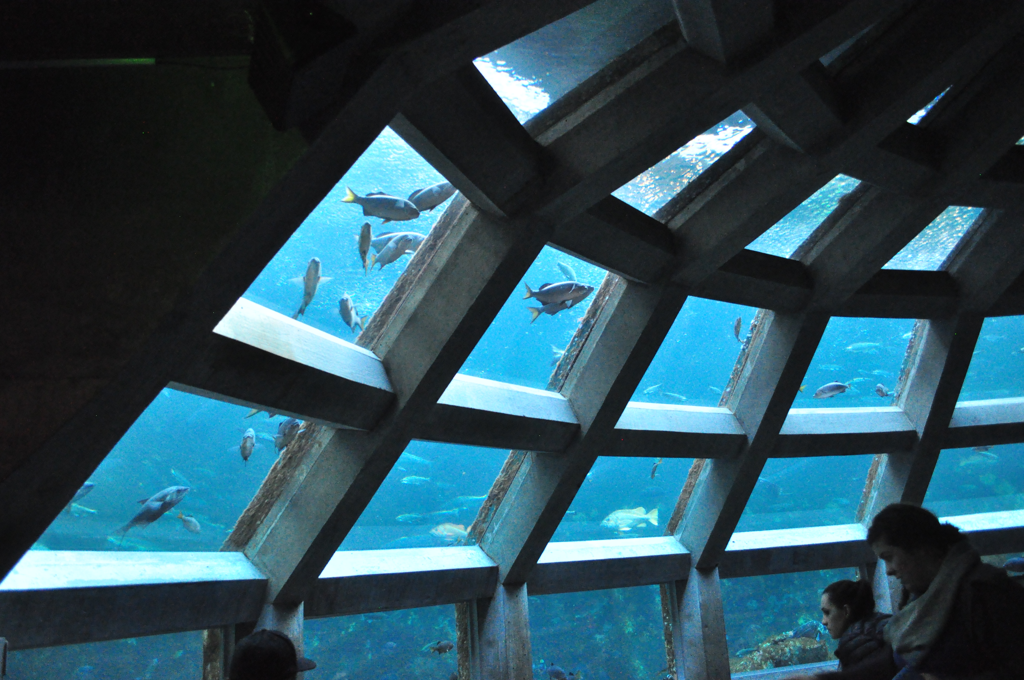 Seattle Aquarium 039 - Underwater Dome (15786902813).jpg