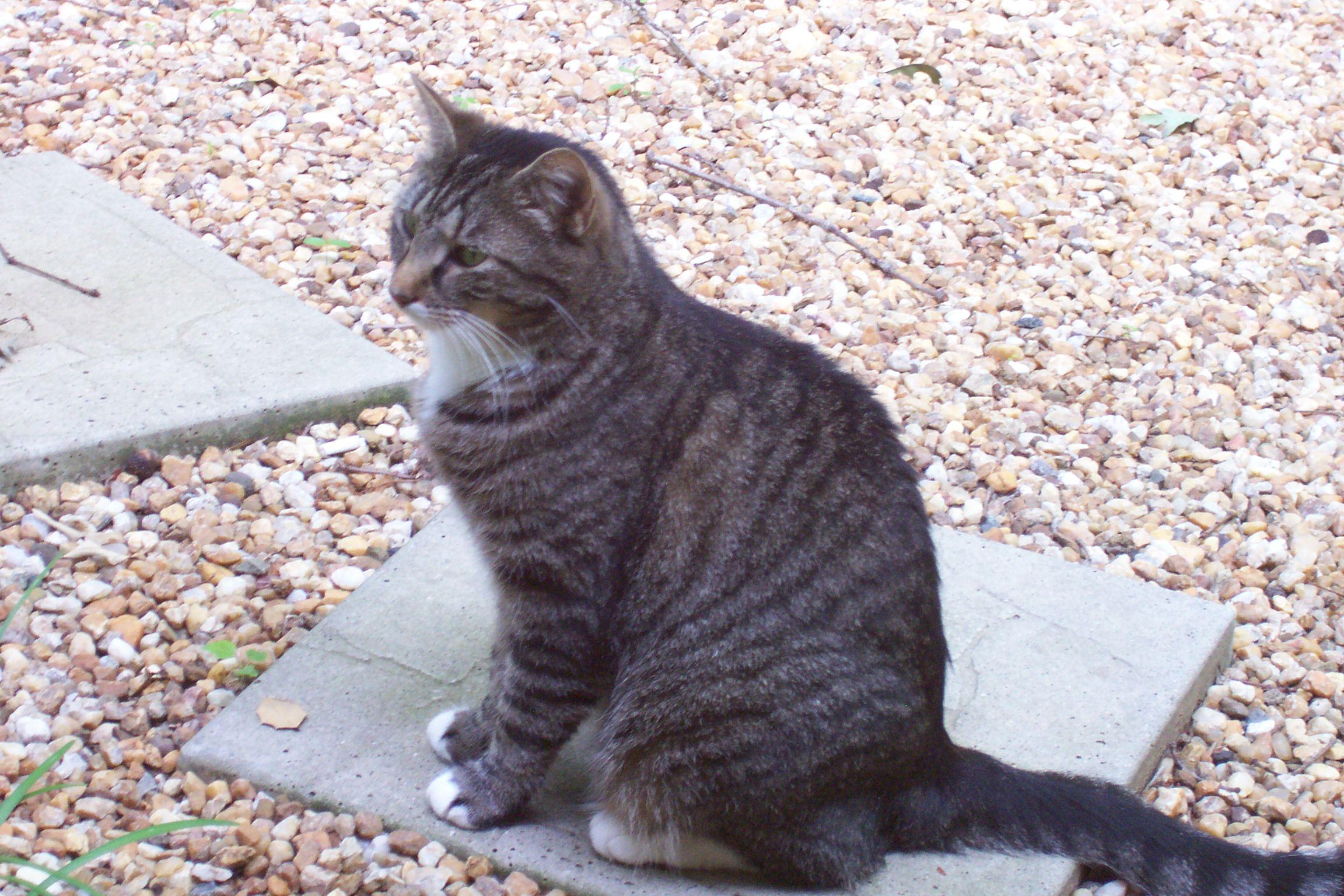 Grey Tiger Striped Cat Names