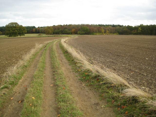 Tewin, The Hertfordshire Chain Walk - geograph.org.uk - 1562027