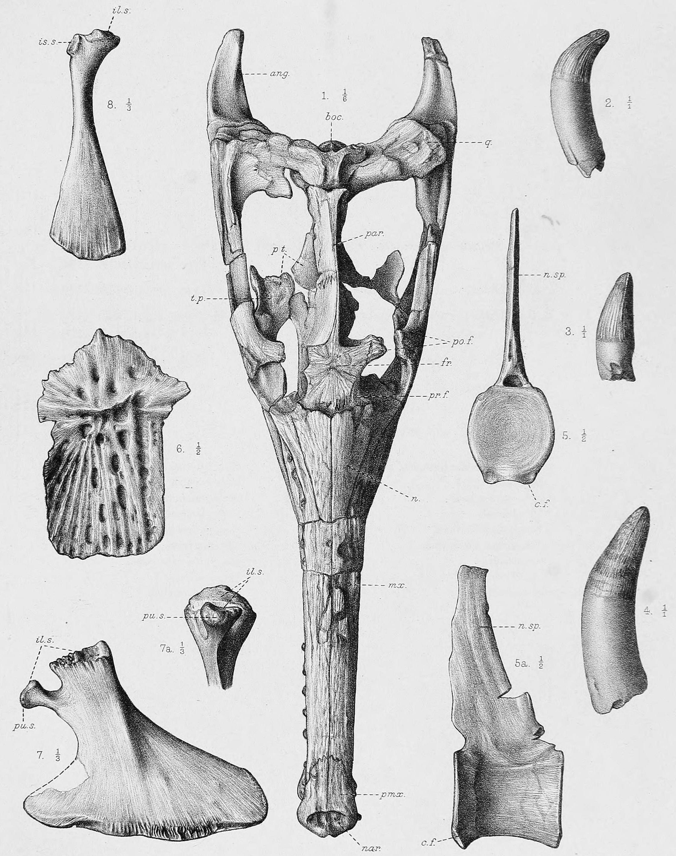 British Museum Natural History Library Catalogue