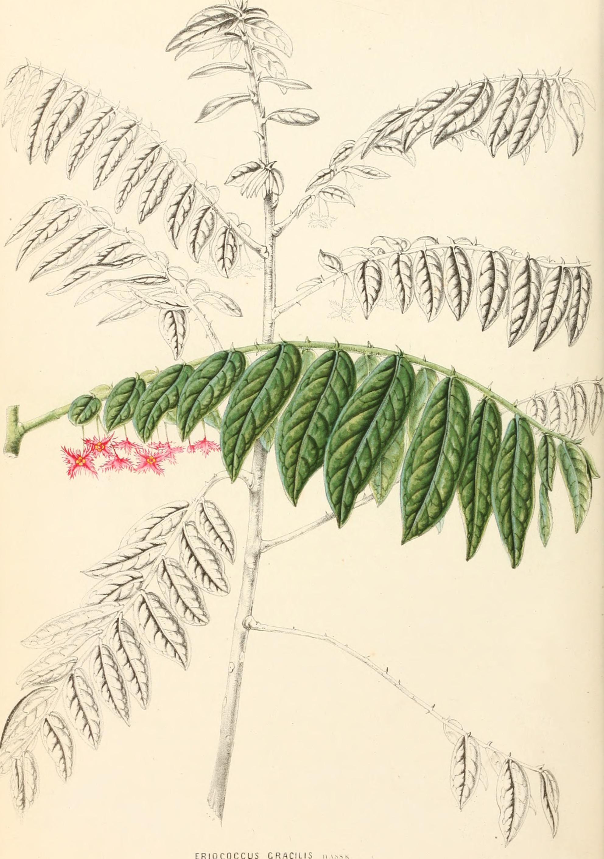 File annales d 39 horticulture et de botanique ou flore des Histoire des jardins wikipedia