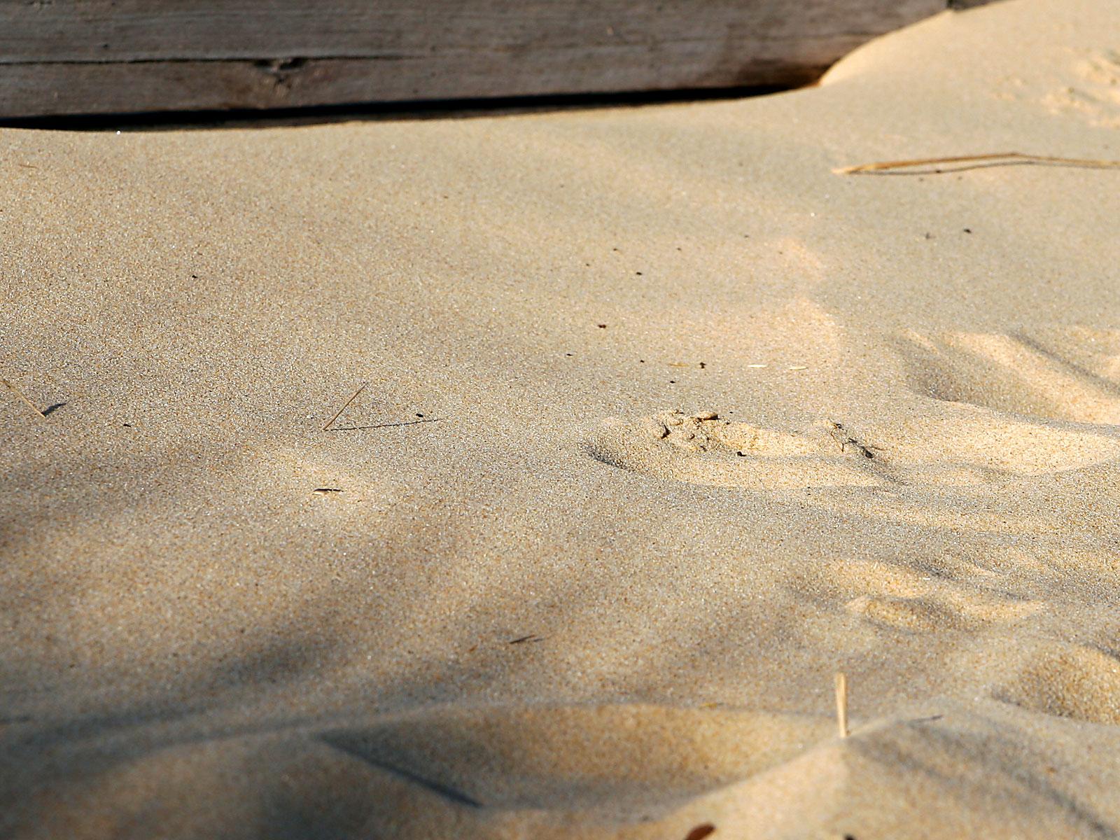 [Image: Beach_sand.jpg]