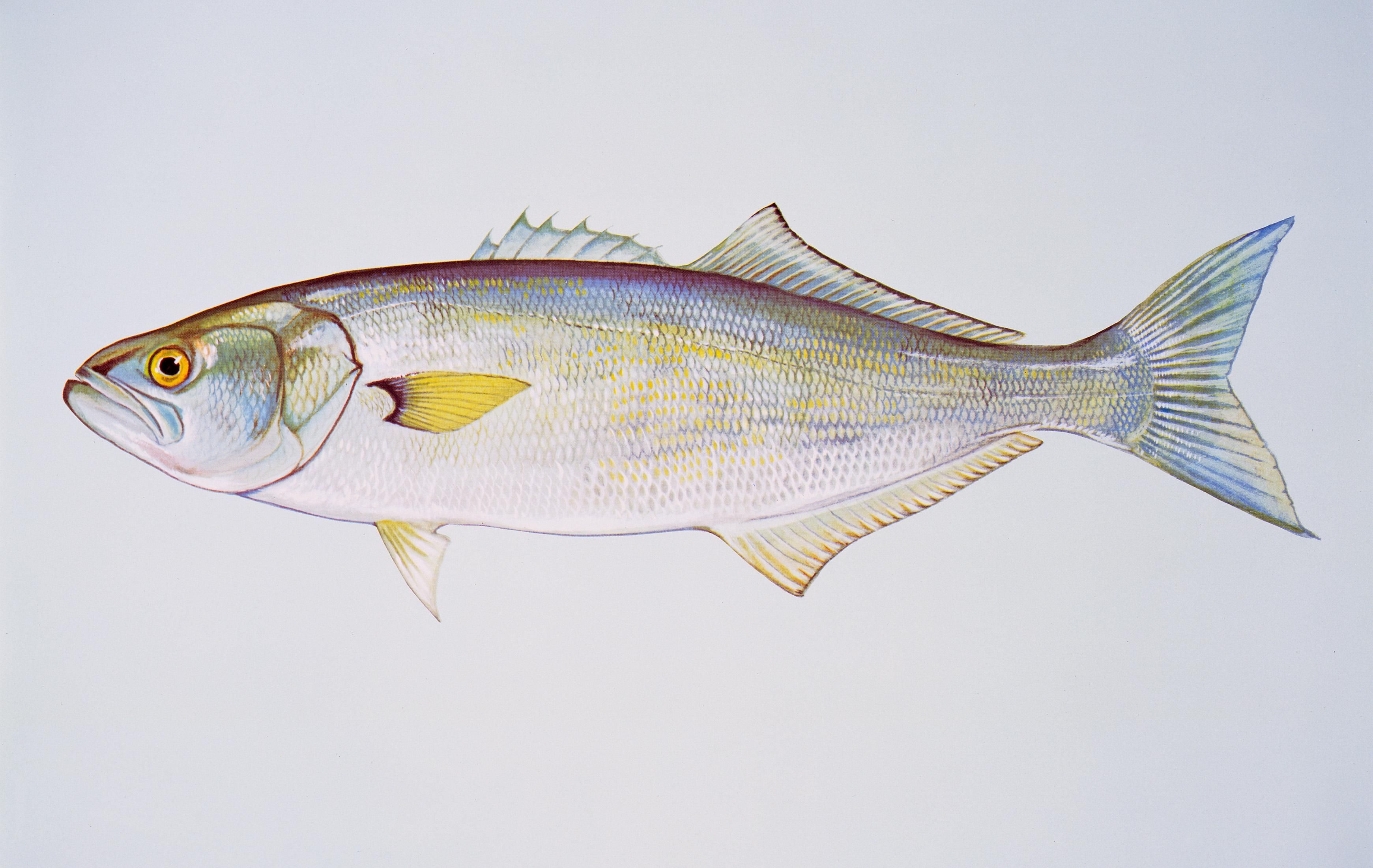 Tales of foodiness fishiness heritage radio network for Fish with least mercury