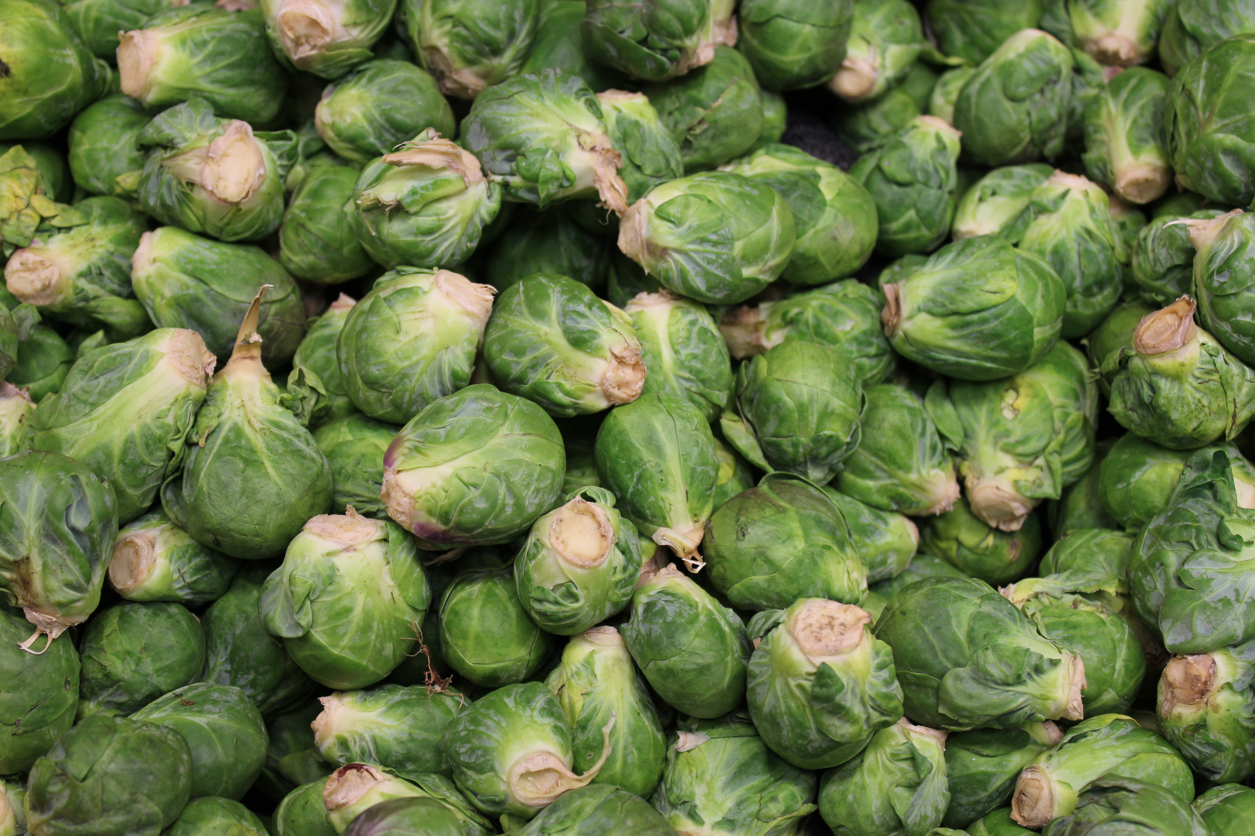 File:Brussel Sprouts bunch.JPG - Wikimedia Commons
