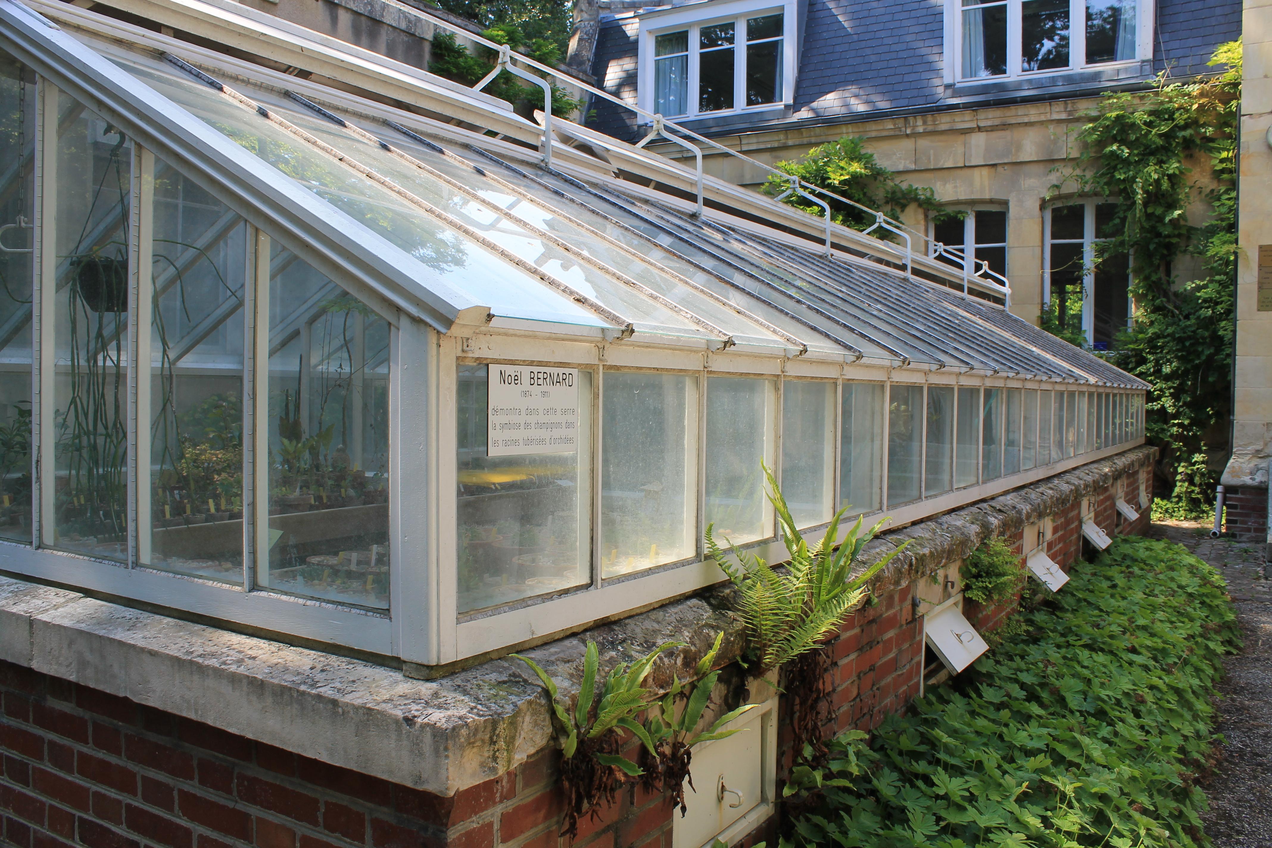 File caen serre institut botanique jpg wikimedia commons - Serre jardin polycarbonate caen ...