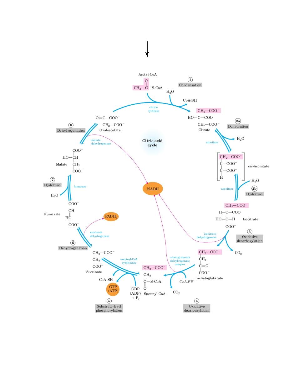 Lehninger biochemistry free