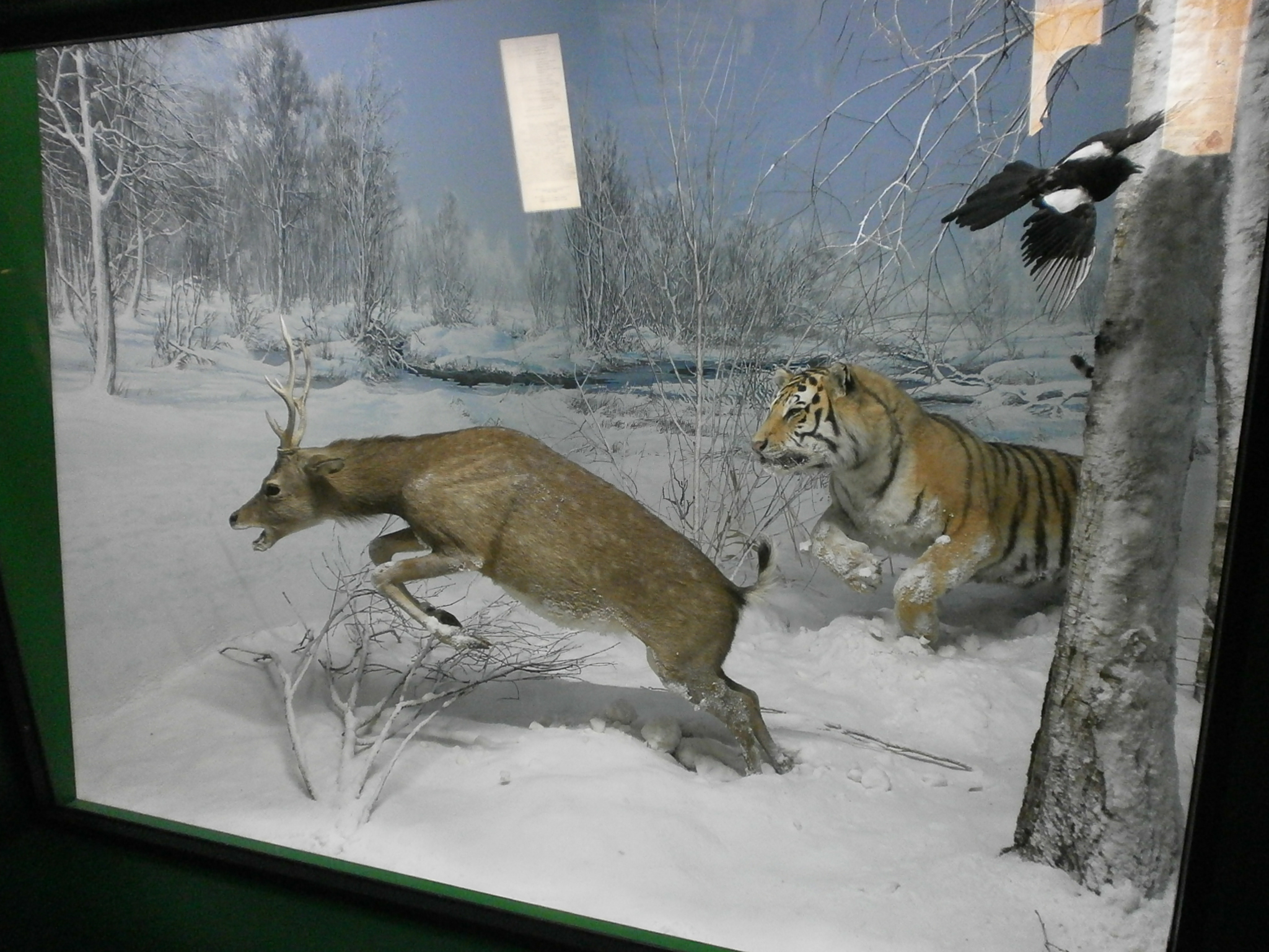 Natural Images Taxidermy