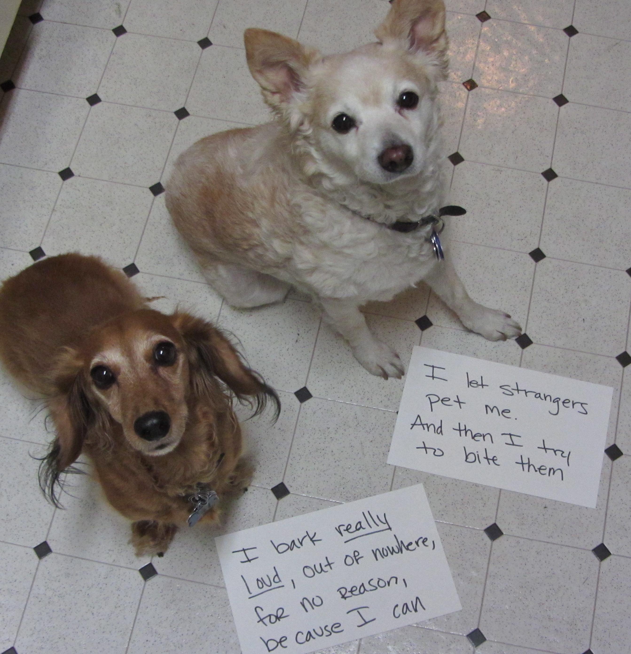 File Dog shamingjpg   Wikipedia the free encyclopedia lhy5UGf5