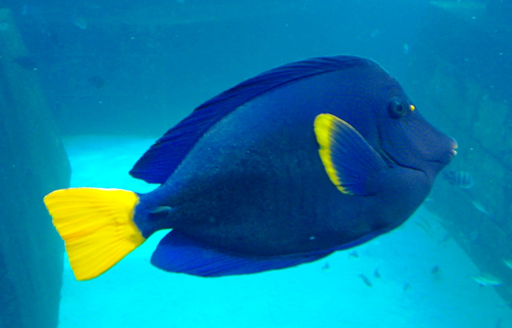 Blue Tang Aquarium