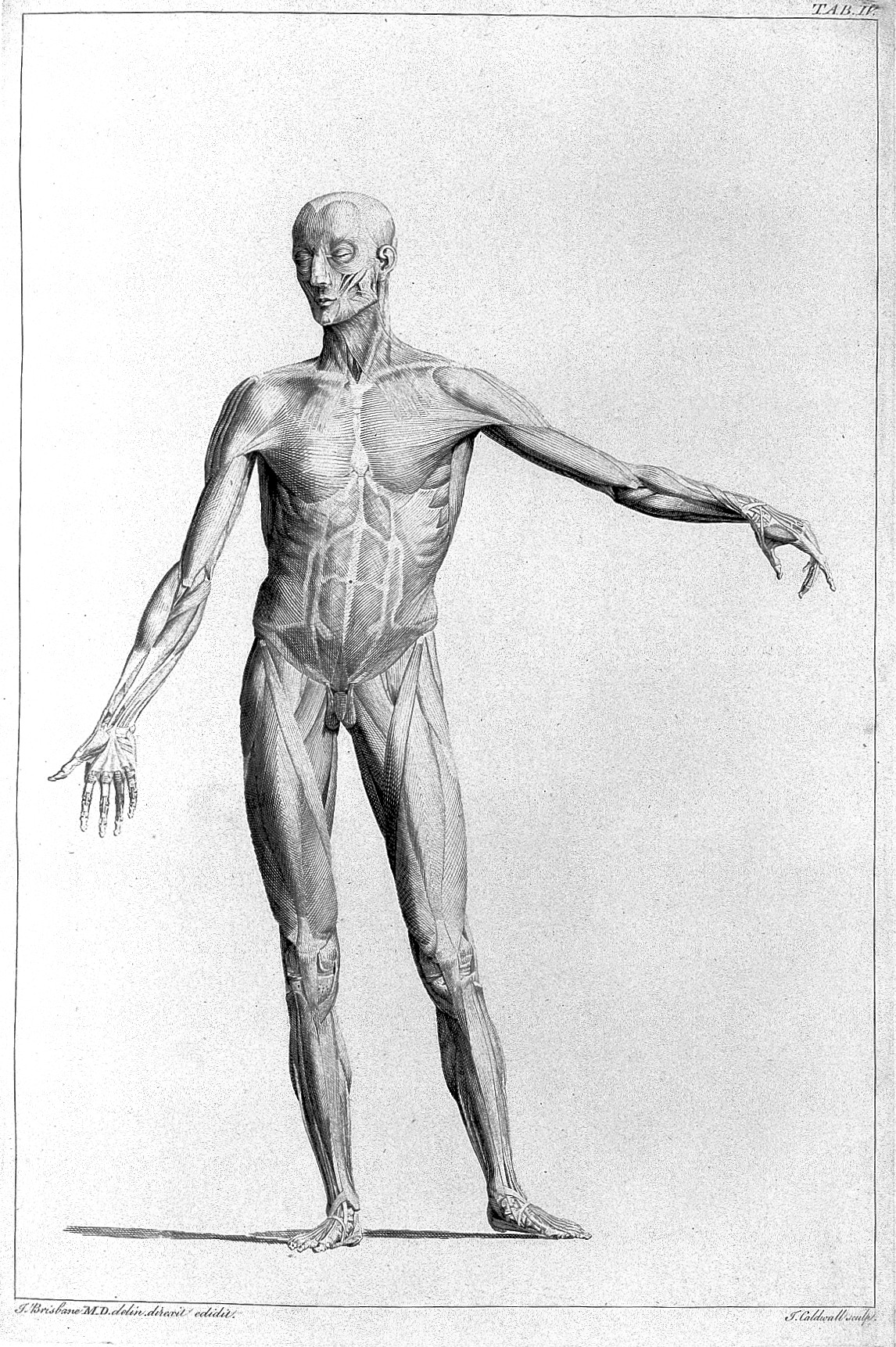 File:Engraving from The Anatomy of painting... Wellcome L0011911.jpg ...