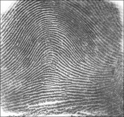 fingerprint identification thesis Thesis - free download as word doc identification procedures the use of biometrics was mainly confined to the areas of dna and fingerprint testing.