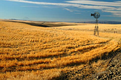 Oregon Blue Book >> File:Grain Field and Windmill (Sherman County, Oregon scenic images) (sheD0073).jpg