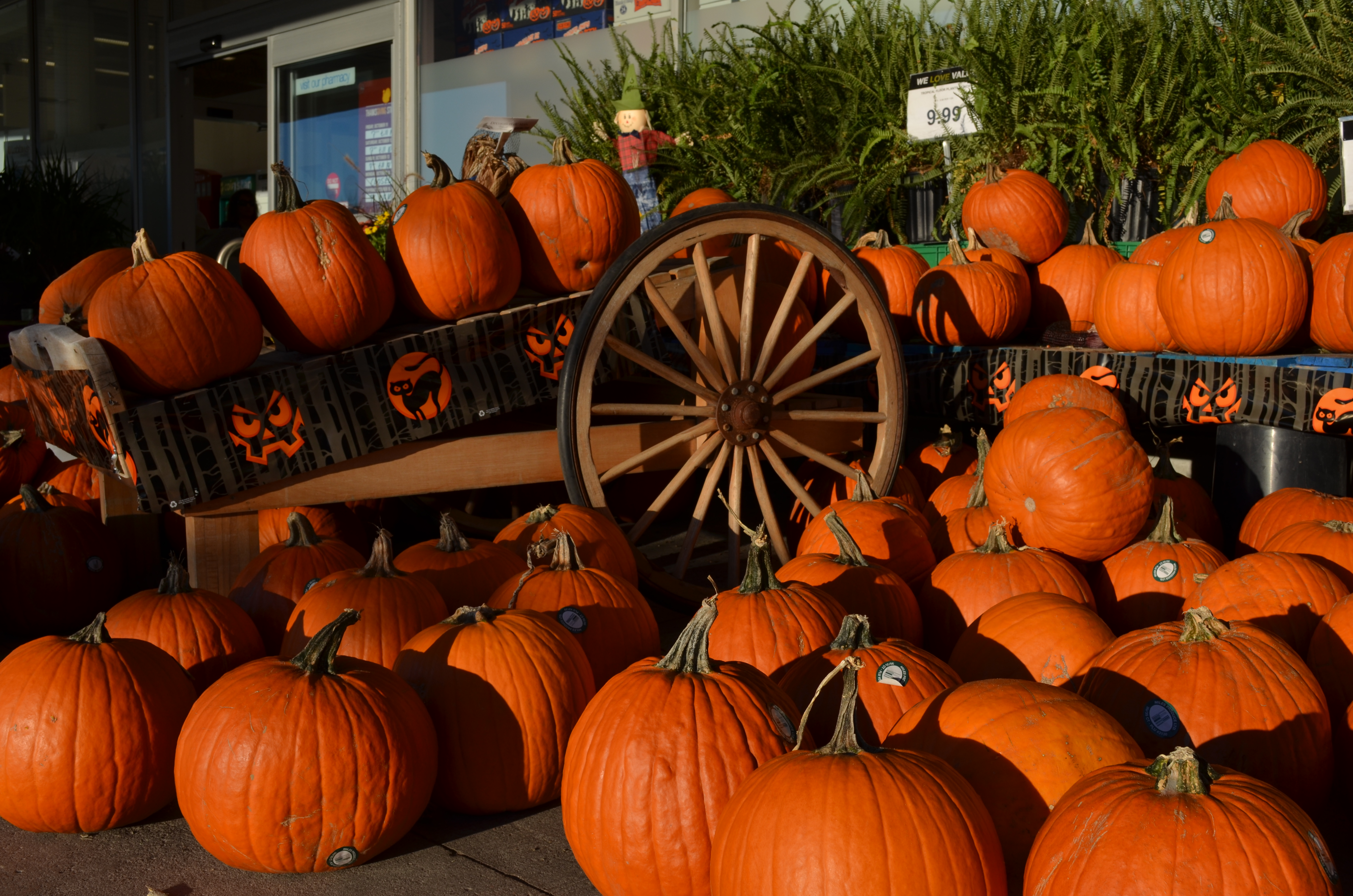 Wallpapers fre fall pumpkin desktop backgrounds - Pumpkin wallpaper fall ...