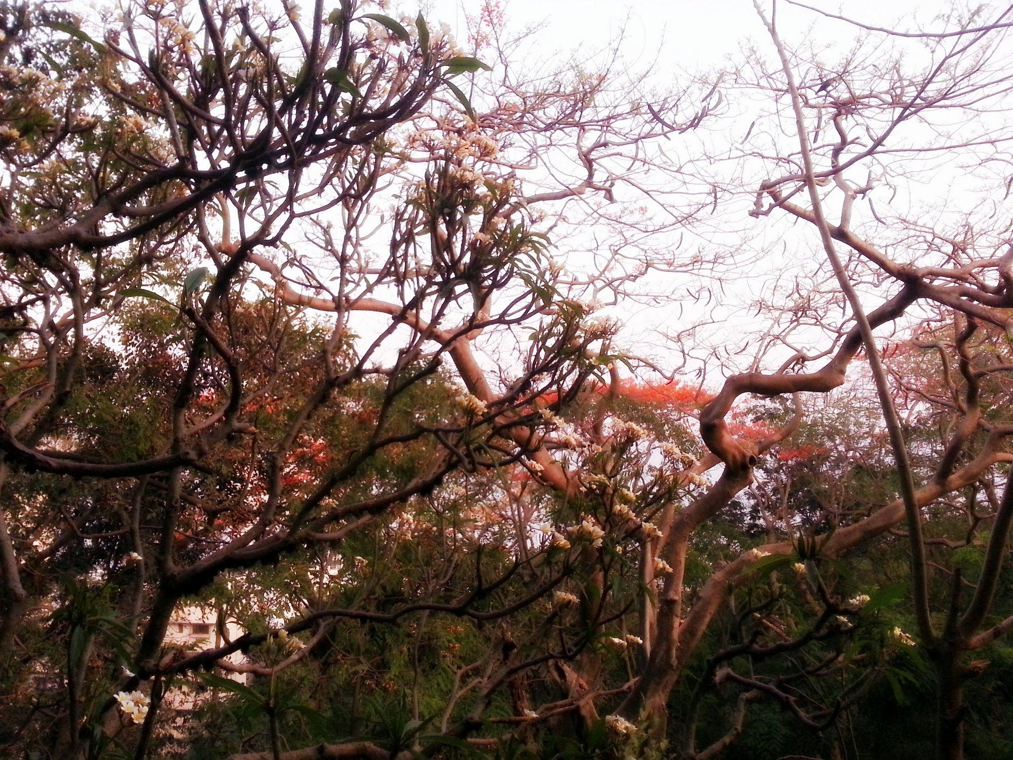 File:Hanging garden mumbai blooming flowers.jpg - Wikimedia Commons