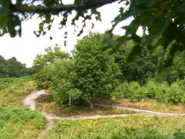 Headley Heath, North Downs - geograph.org.uk - 1396330