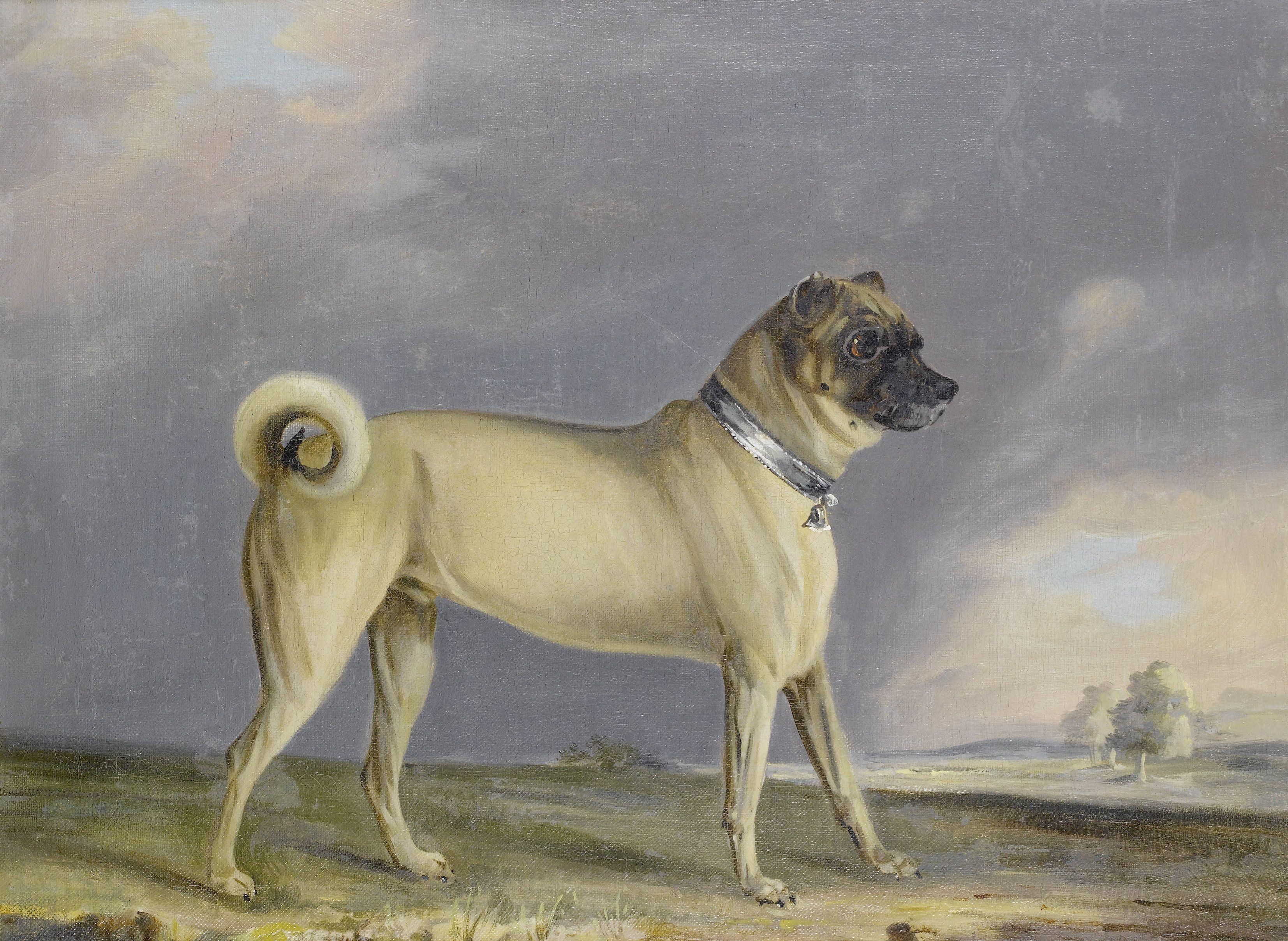 File Henry Bernard Chalon A Pug Dog