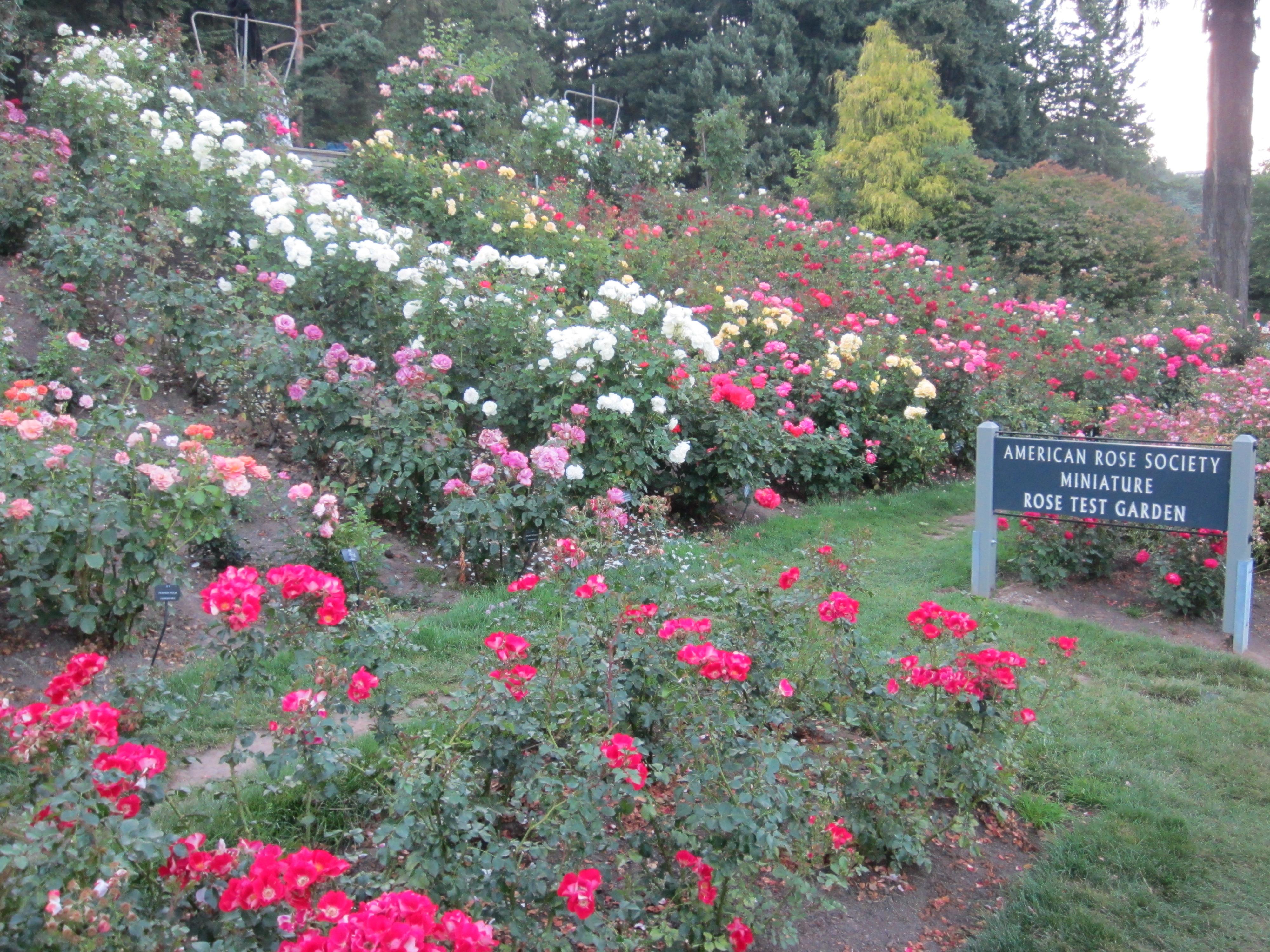 File International Rose Test Garden In Portland Ore