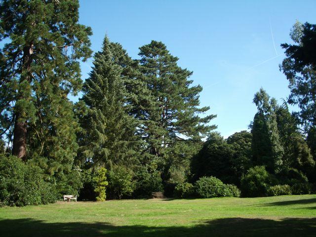 Nuneham Courteney Arboretum - geograph.org.uk - 1455543