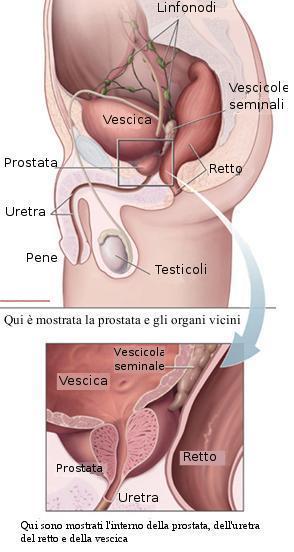 prostata e al disotto del 4.0