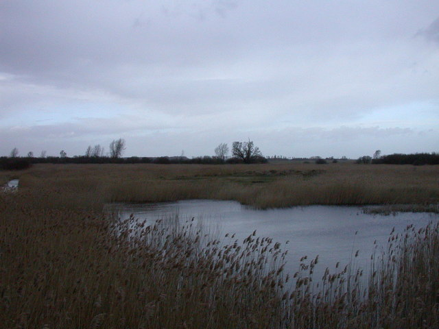Reed beds, Woodwalton Fen NNR - geograph.org.uk - 678535