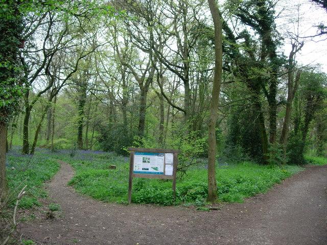Staffhurst Wood - geograph.org.uk - 163285
