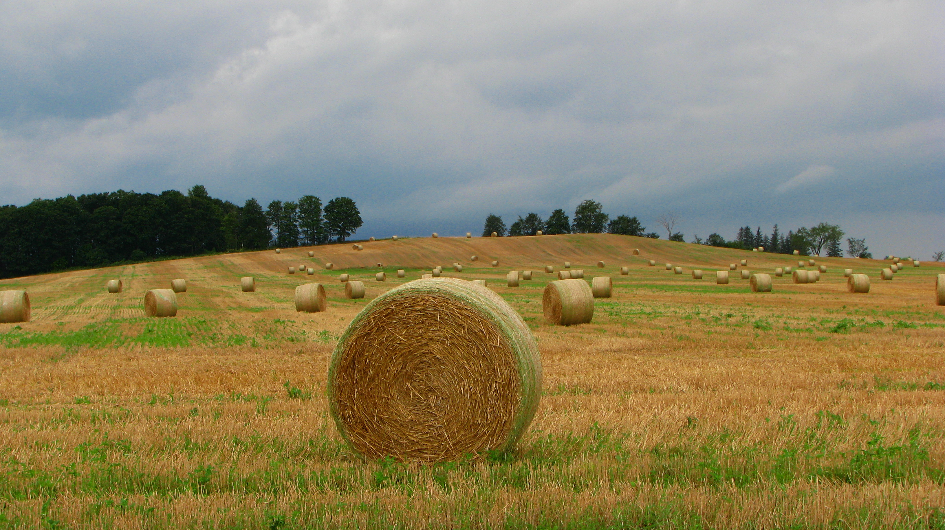 Straw bales on a stubble field in Alliston, Ontario.jpg
