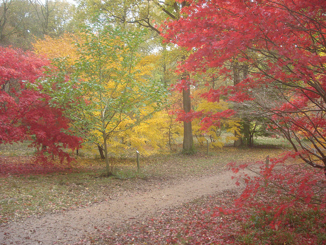 English: The Autumn Garden - 5 The arboretum i...