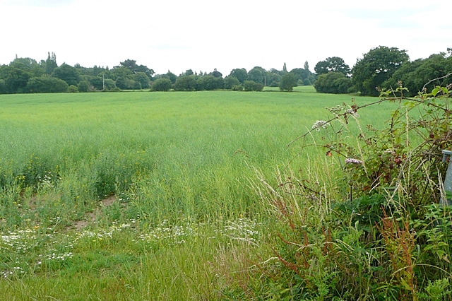 Towards Bramley - geograph.org.uk - 1393207