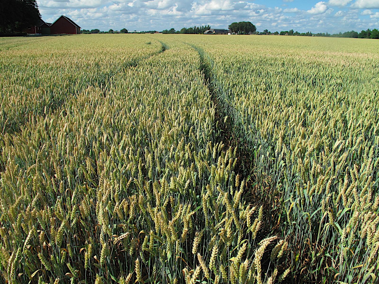 Особенности охранных услуг в сфере сельхозхохяйства