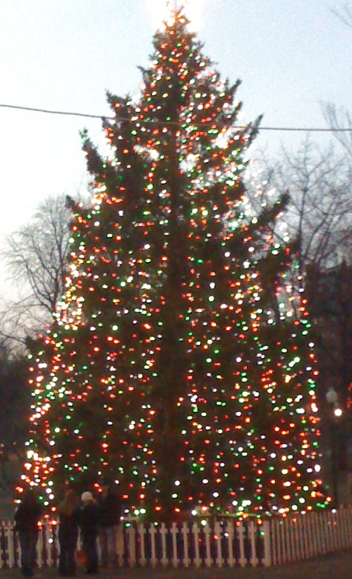 boston christmas tree wikipedia - A Christmas Tree