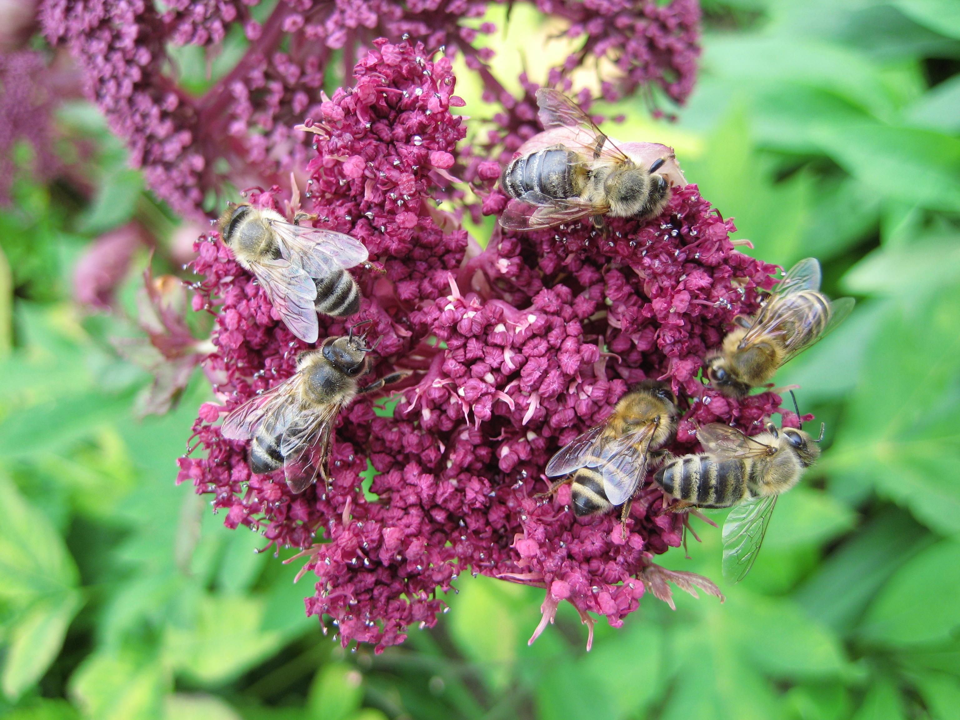 Planten Voor Bijen.Bijen Bioweetjes Nl