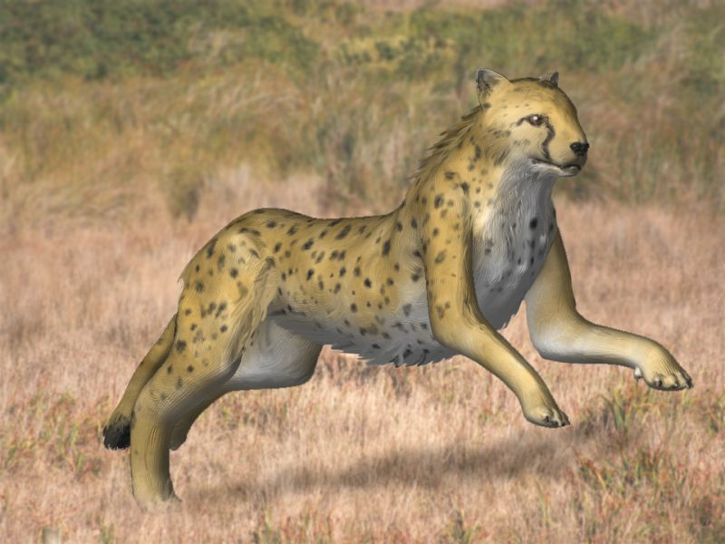 A reconstruction of A. kurteni. From Wikipedia (Open Access).