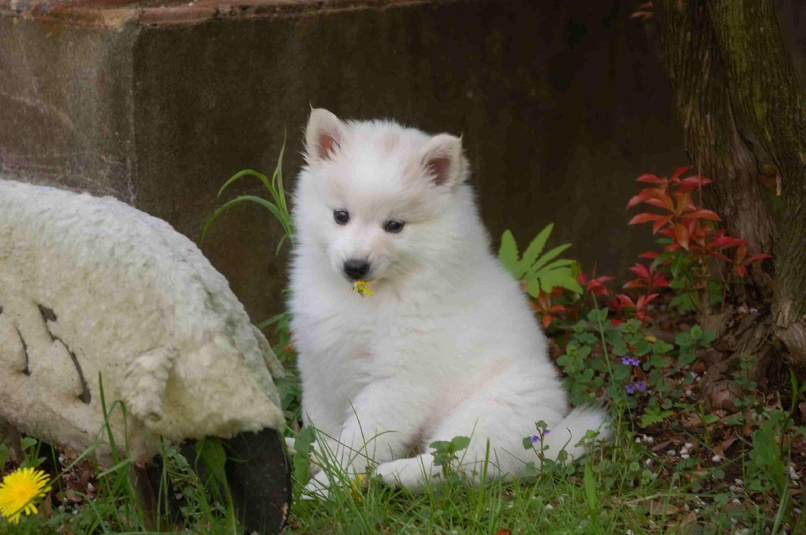 Fluffy Puppy Dog Cat Grooming Laramie Wy