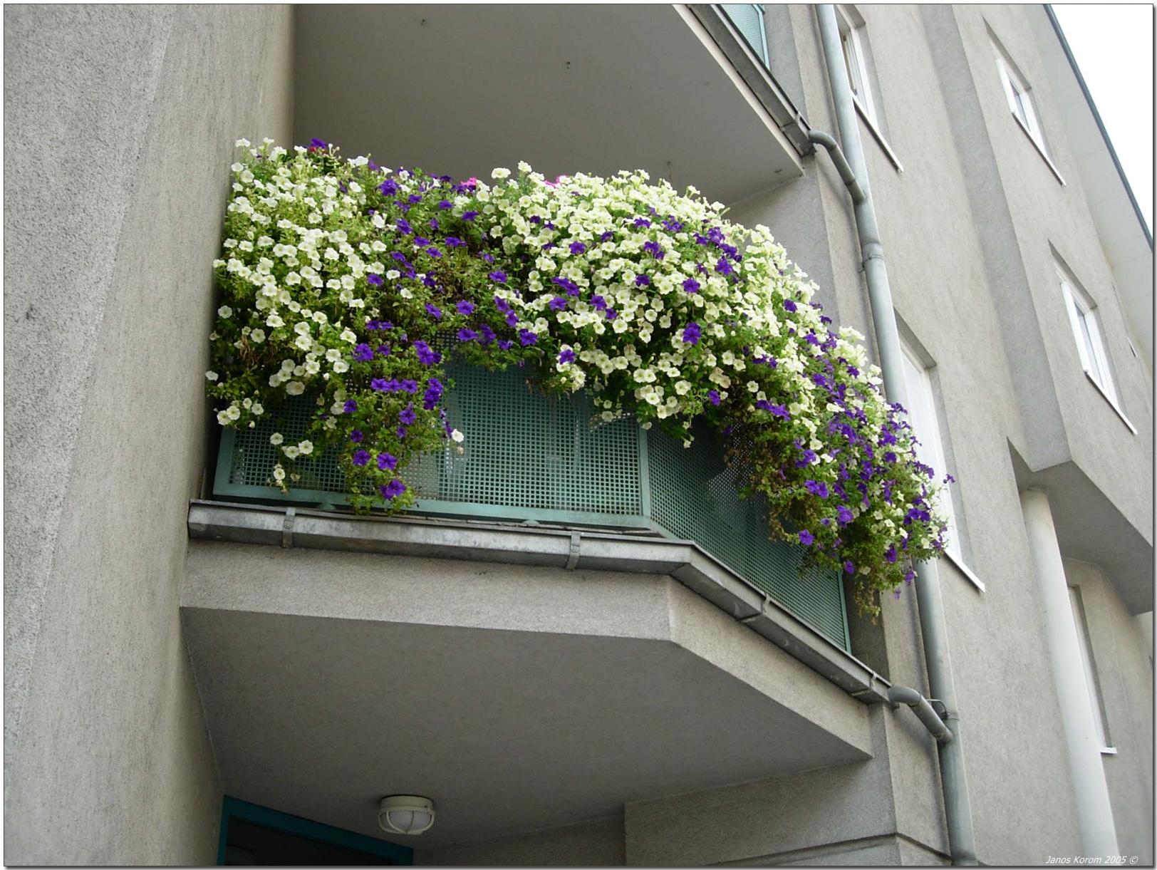 Неприхотливые однолетники для вашего сада и балкона.