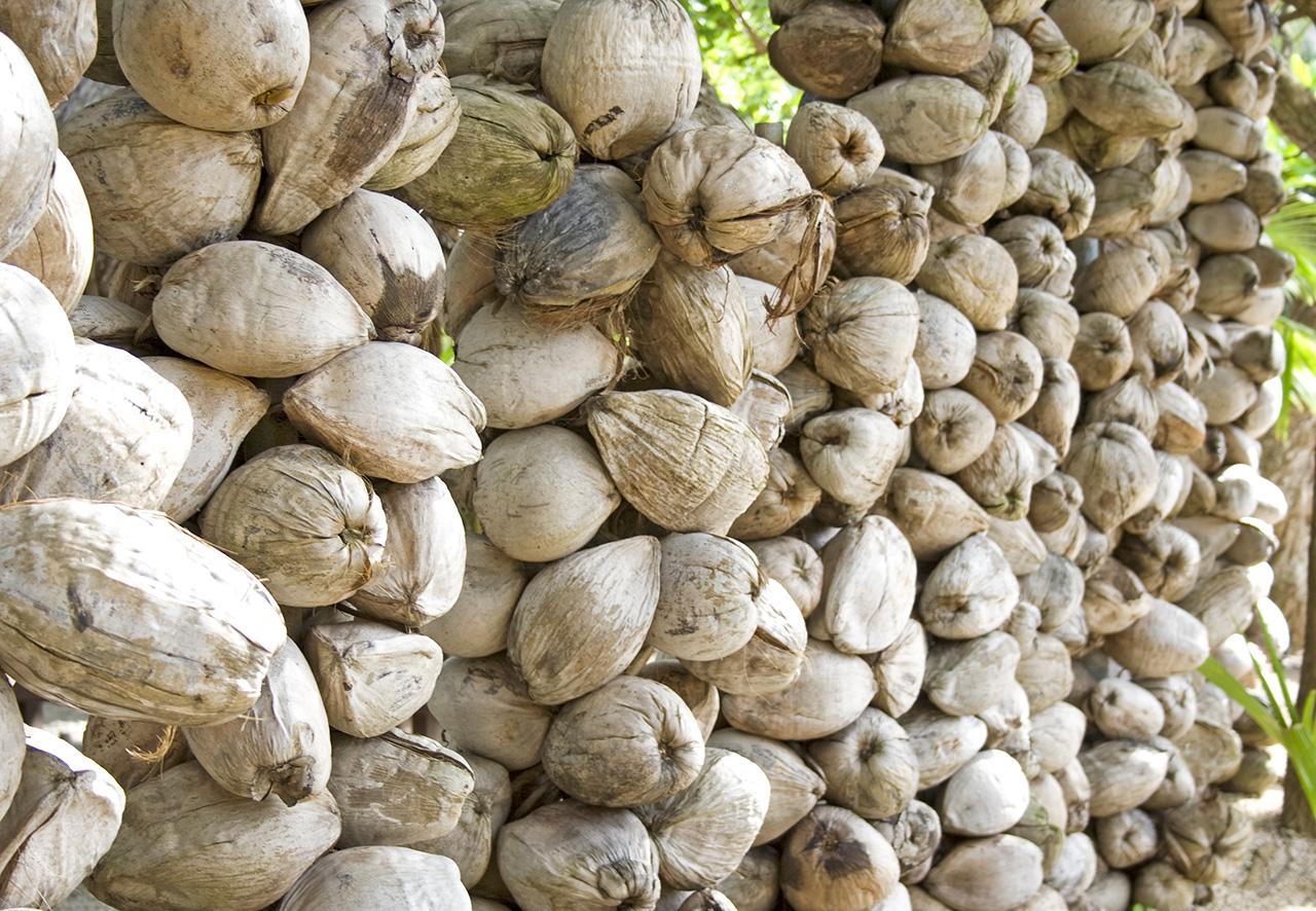 Coconut_wall.jpg