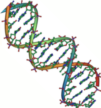DNA double helix 45.PNG