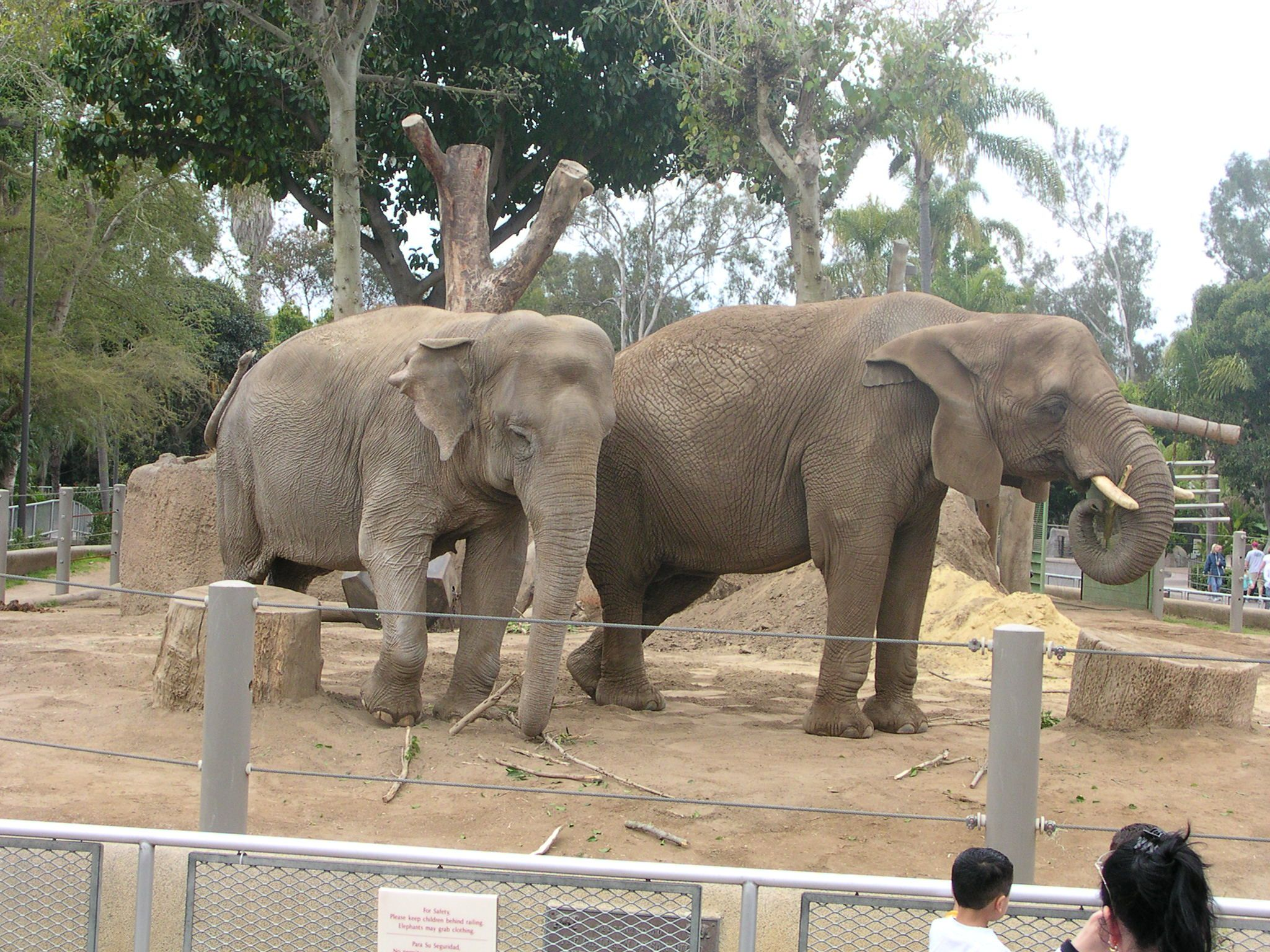 zoo elephants Zoo berlin is germany's oldest zoological garden and home to the world's largest variety of species almost 20,000 animals of around 1,400 species live in the 33-hectare zoo they include elephants, giraffes, gorillas, and germany's only giant pandas.