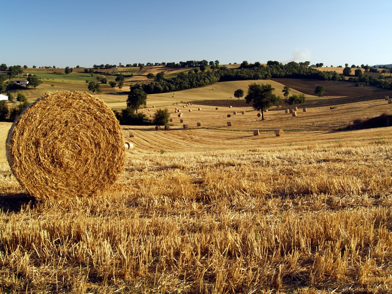 File:Fields of gold Umbria.jpg - Wikimedia Commons