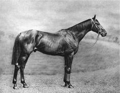 Gorgos British-bred Thoroughbred racehorse