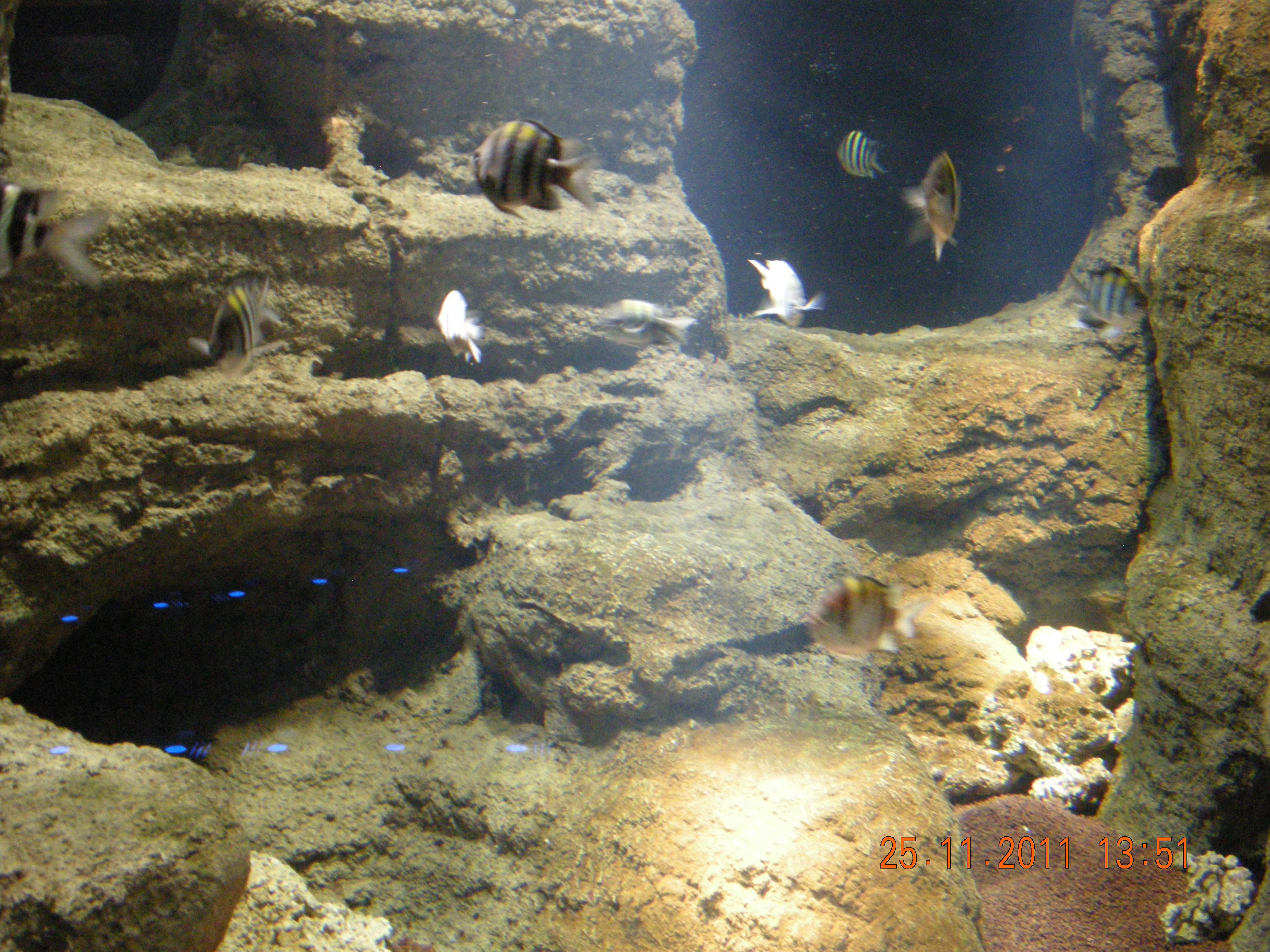 Description Istanbul Aquarium 33.jpg
