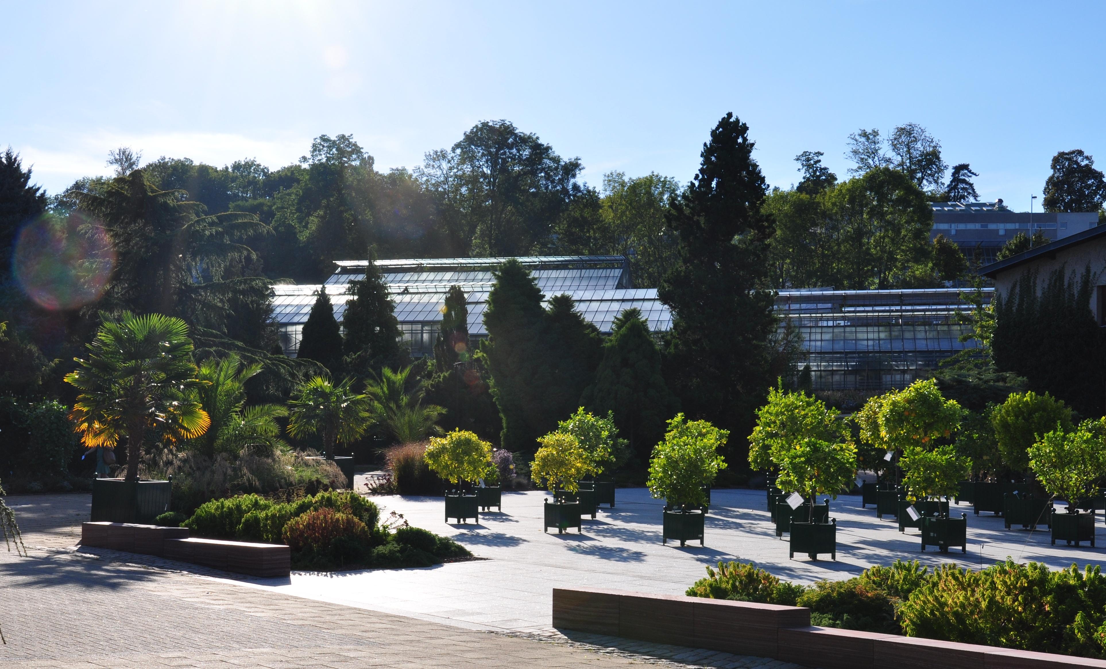 File jardin botanique montet wikimedia commons for Jardin botanique nancy