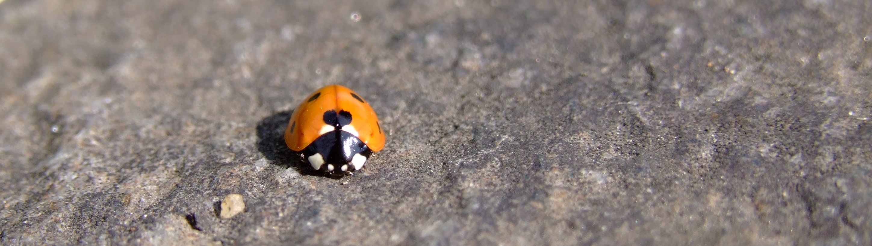 File:Ladybird (3721026194).jpg - Wikimedia Commons