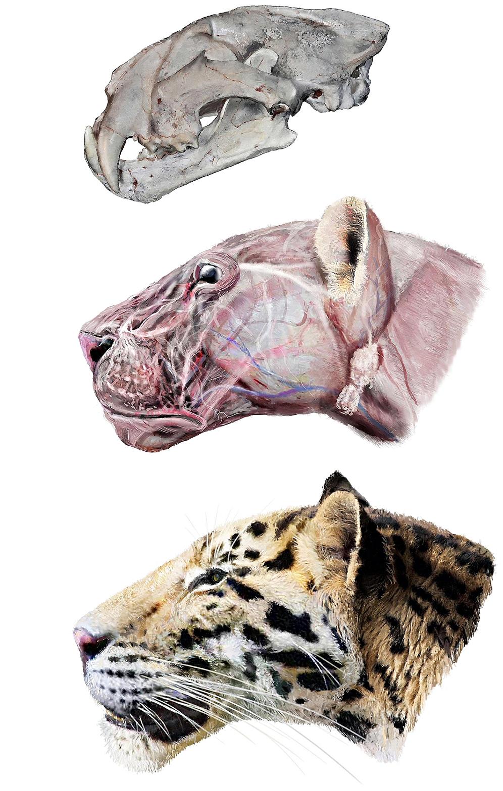 Panthera zdanskyi — Википедия домен это что